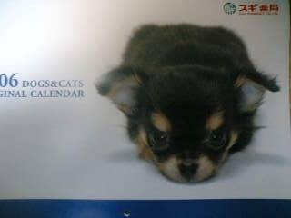 【写真】スギ薬局 2006 DOGS & CATS ORIGINAL CALENDAR