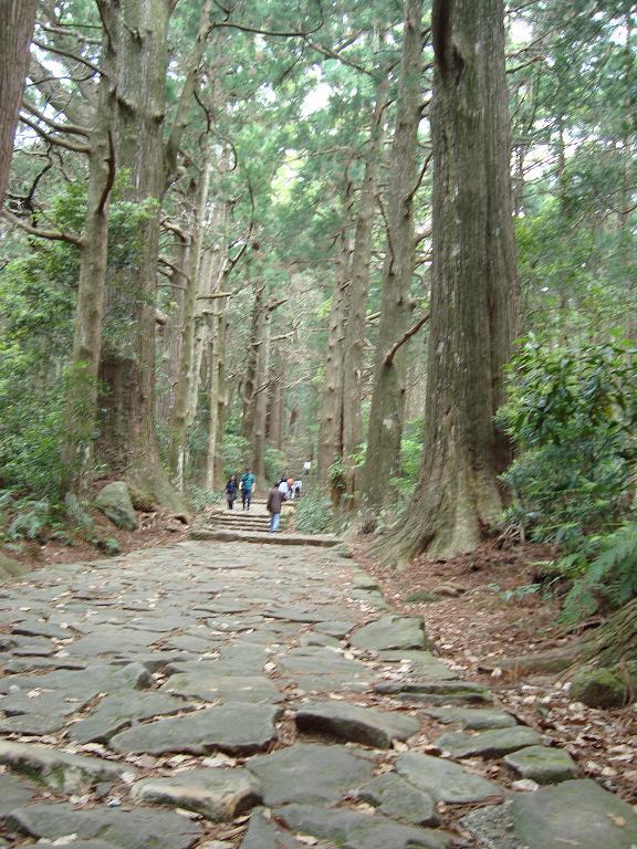 【写真】巨大な木々が並ぶ熊野古道