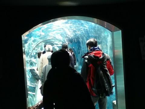 【写真】ぺんぎん館のトンネル