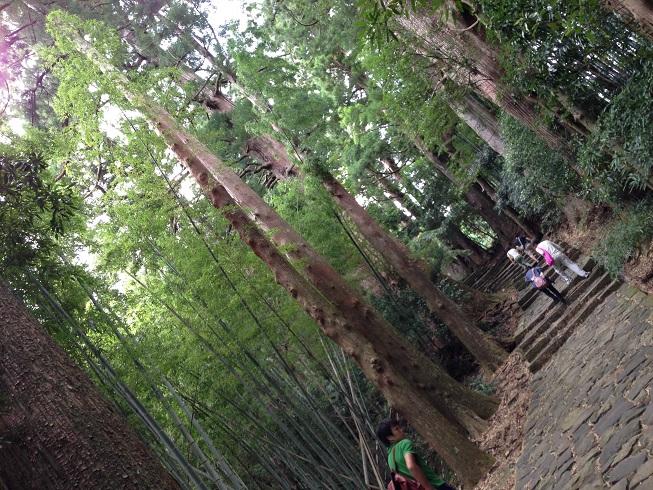 【写真】杉並木の景観